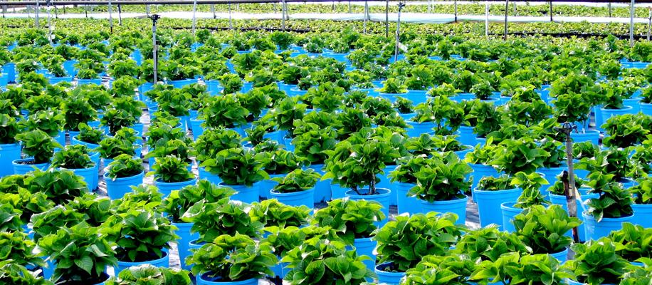 plant-nurseries-in-chandigarh